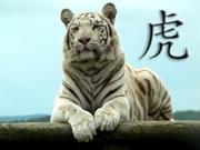 Anul Tigrului Alb